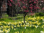Highlight for Album: 2012 March 4th Filoli Gardens