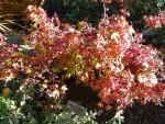 Highlight for Album: Fall Color