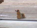 2006 Jan 21 Squirrel 1.jpg