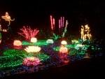 Highlight for Album: Garden de Lights