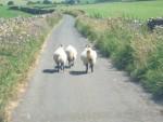 Highlight for Album: Cumbria 24-27 July