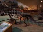 Highlight for Album: Wyoming Dinosaur Center; Thermopolis, WY