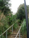 Highlight for Album: Walk #19 Bernal Heights East Stairway Trails