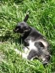 Highlight for Album: 2009 May Pescadero - Goat Farm