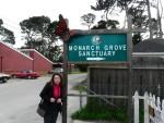 Highlight for Album: 2010 Feb Monarchs at Pacific Grove & Monterey Aquarium
