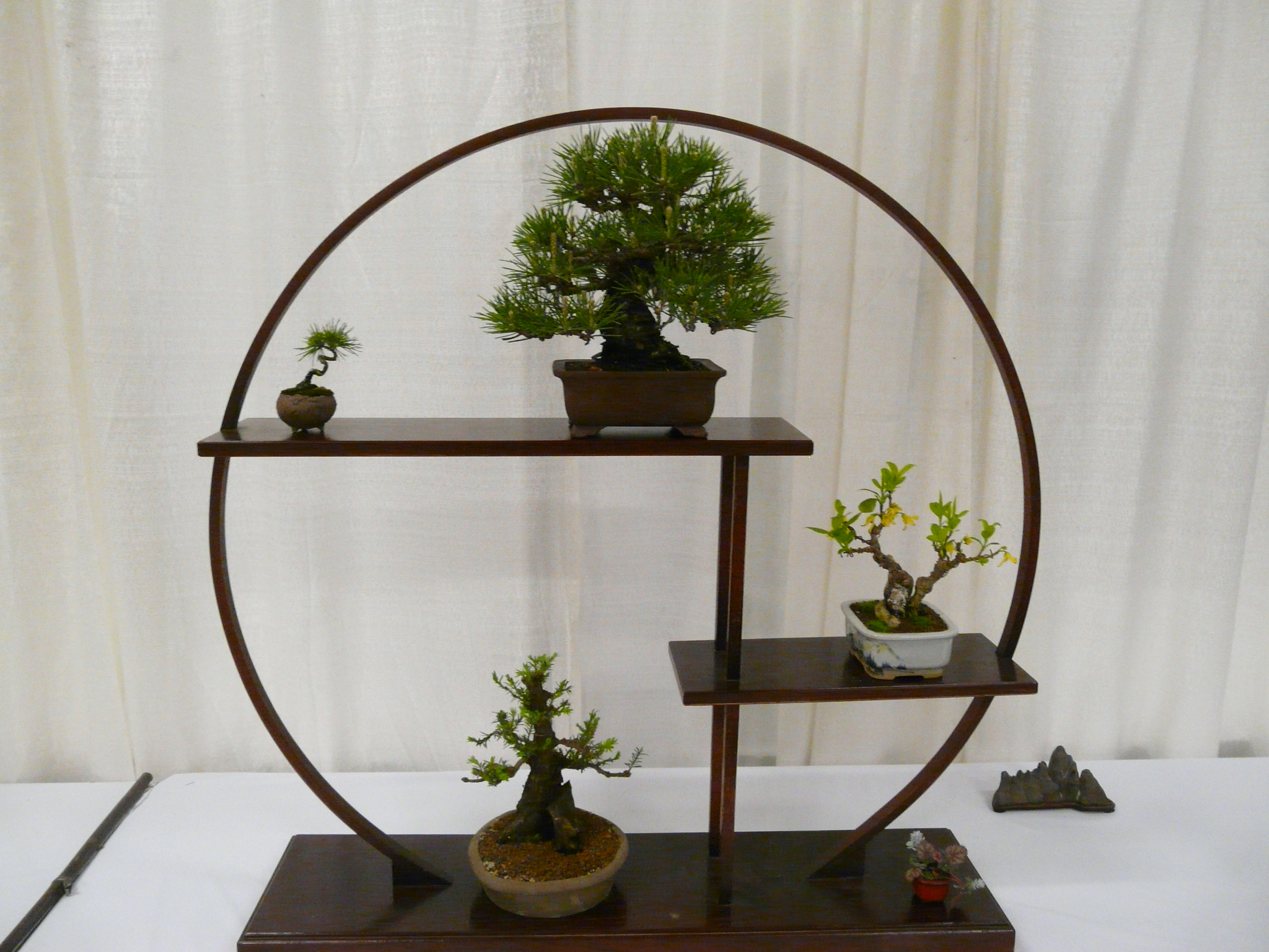 Backyard Bonsai Display : 2010Mar24SFFlowerGardenShow47Bonsaidisplayjpg