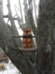 2011 Feb small bear mounted in tree.JPG