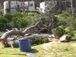 2011 Oct 26th Punta 02 dead trees cut down.JPG