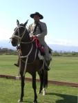 2011 Nov 5th Cafeyate 05 Peruvian horse.JPG