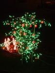 2012 Dec Garden d\'Lights 01 tomato