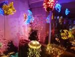 2012 Dec Garden d\'Lights 05 aquarium