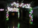 2012 Dec Garden d\'Lights 07 grape arbor