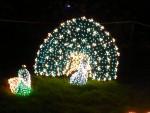 2012 Dec Garden d\'Lights 11 peacocks