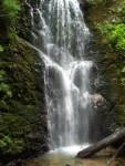 Highlight for Album: Big Basin Redwoods State Park