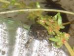 05 July 01 Toads 01.jpg