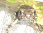 05 July 01 Toads 02.jpg
