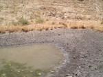 05 July 31 Shell Ridge toad-frogs 06.jpg