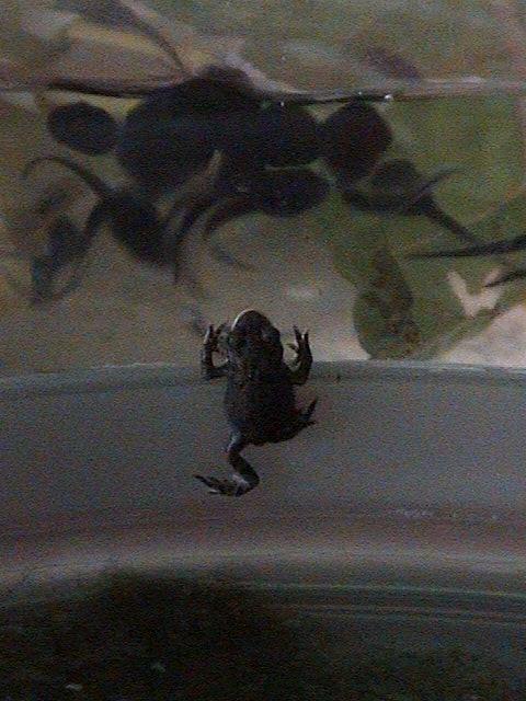 05 June 00 Toad & Friends.JPG