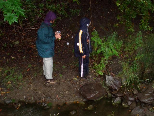 05 June 08 released tadpoles 03 looking for right spot.jpg